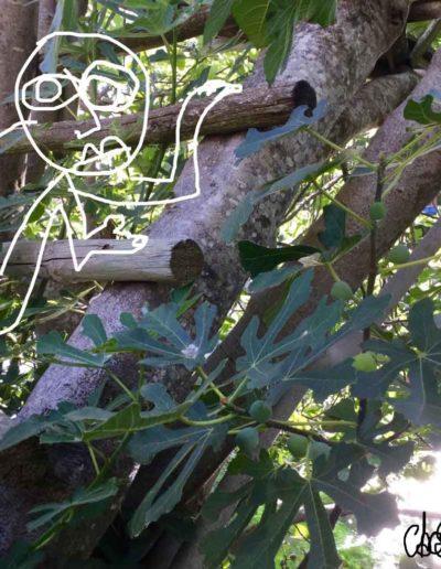 CBost - Photo dessin - Sorgues - Mangeur de figues